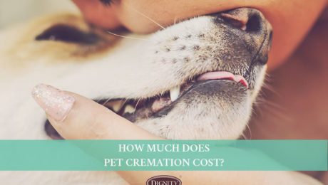 How much does pet cremation cost