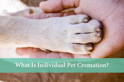 What is individual pet cremation?