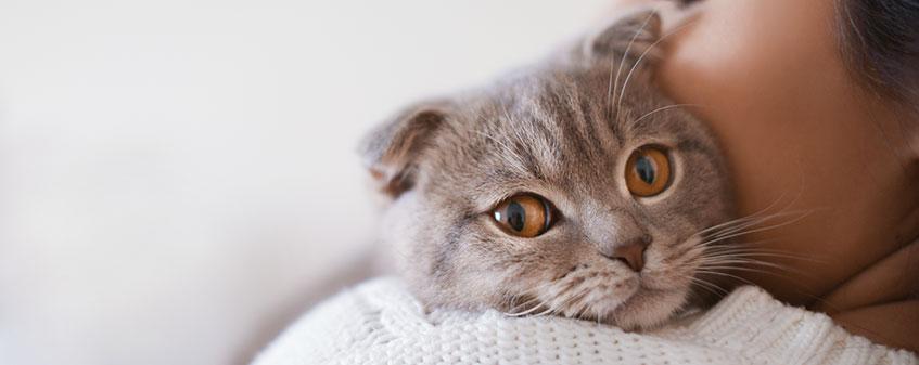 Individual Cat Cremation