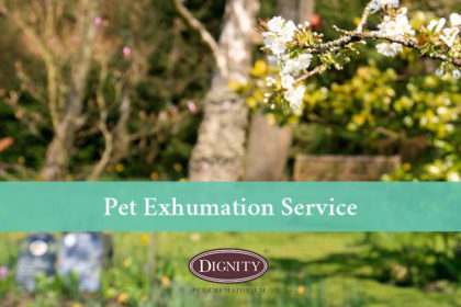 Pet Exhumation Service from Dignity