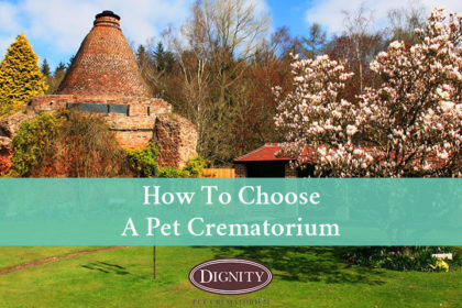 How to choose a pet crematorium