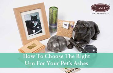 Urn For Pet Ashes Options