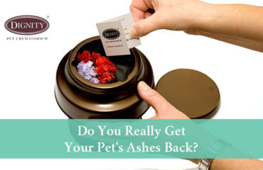 Do you really get your pet's ashes back after cremation?